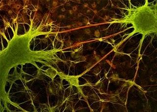 Synapse in the brain (Credit: UCLA/Public Domain)
